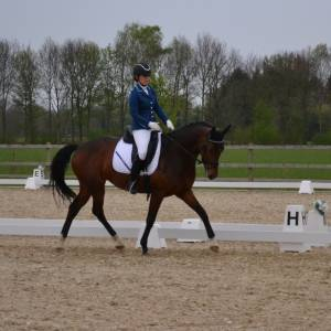 Paardensportvereniging Hertruiters in de prijzen